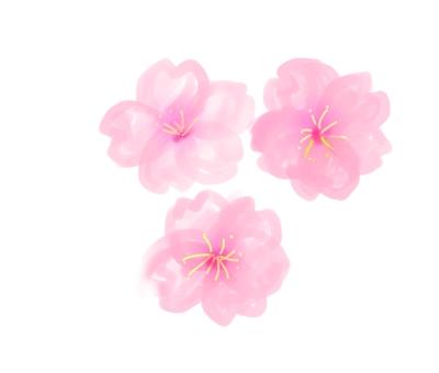 Cherry Blossoms Sakura Watercolor