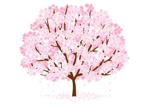 Cherry tree material 116