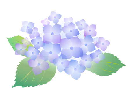 5604. hydrangea, light blue