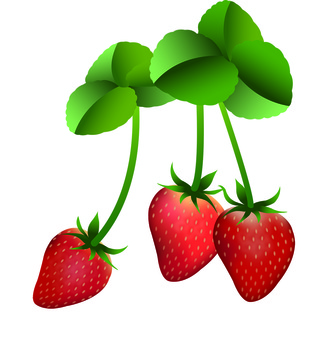 Strawberry strawberry strawberry strawberry