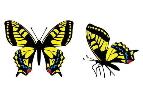 Age butterfly