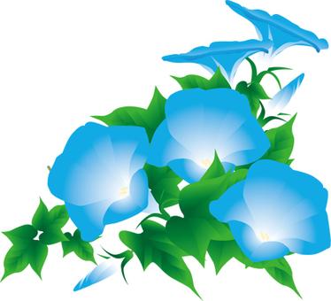 파란 나팔꽃 8