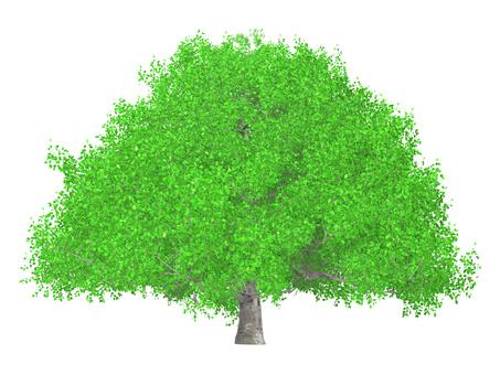 큰 나무 _009