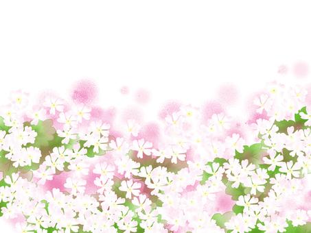 Sakuragi 3