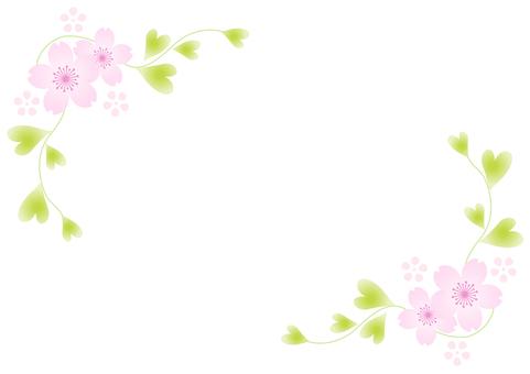 Cherry blossoms 226