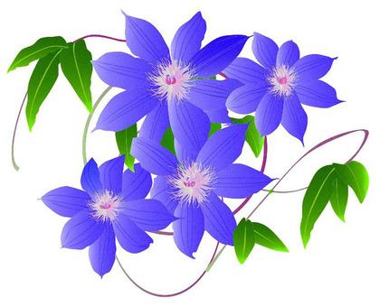 花(鐵線蓮屬)