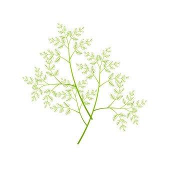 Chamomile leaves