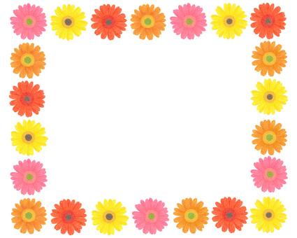 Gerbera's frame