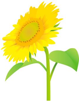 Sunflower Flower 1