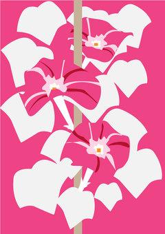 Morning glory pink A4