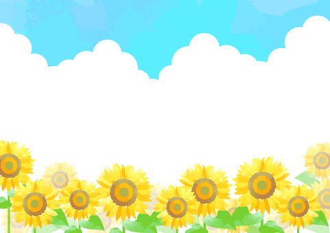 Pastel color sunflower background 4