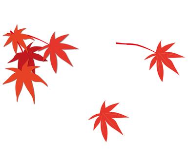 Autumn leaves (maple)