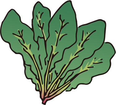 【Vegetables】 Spinach