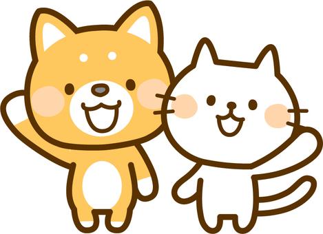 柴犬和白貓