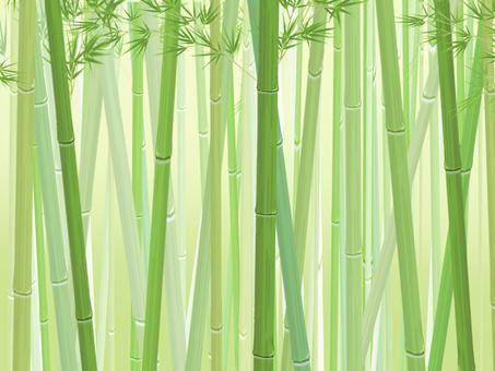 Bamboo grove_horizontal_light background