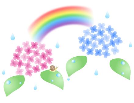 Rain water hydrangea and a rainbow