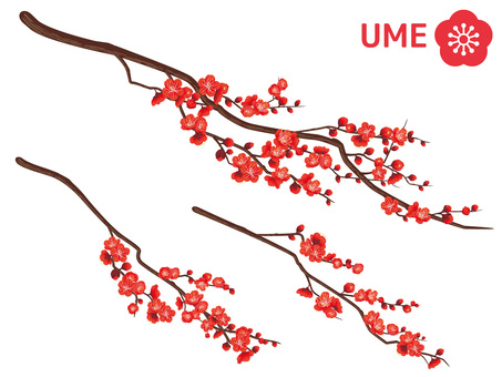 Cut out branches of Xin Chun plum _ 梅 梅 04