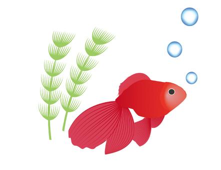 Illustration of goldfish (sideways)