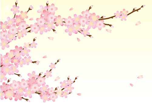 Cherry blossoms and branch cards