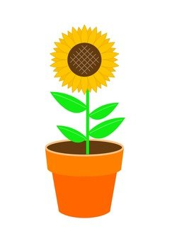 A sunflower potted plant