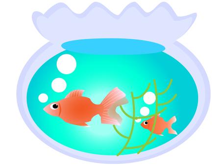 Gold fish bowl 1600 × 1200 px