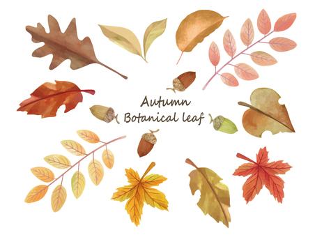 Autumn Botanical Reef Collection 2