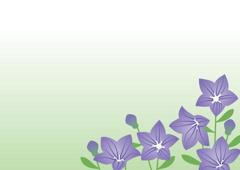 Seven herbs of autumn - bellflower