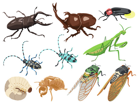 Animal_Insect_Set 1_無線