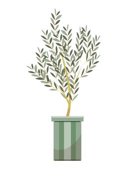 Occidental plant olive tree