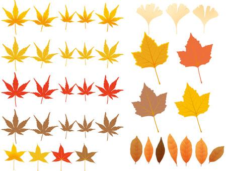 Fallen leaf material