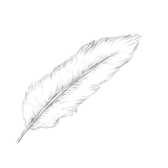 Feather - Sketch