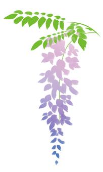 藤の花001