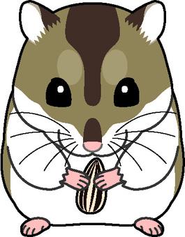 Djangarian hamster 1