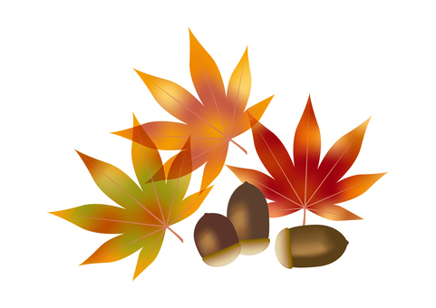 Autumn leaves & acorns 1