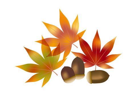 Autumn leaves & acorns 1