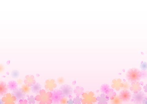 Cherry blossoms 115