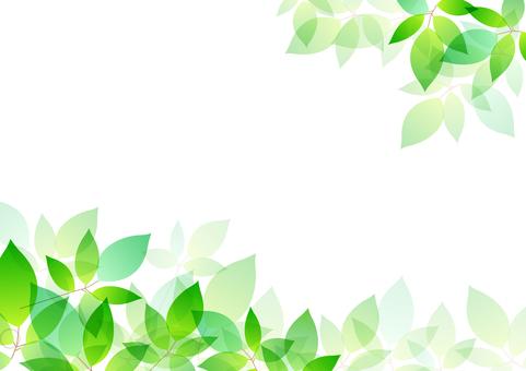 Fresh green material 51