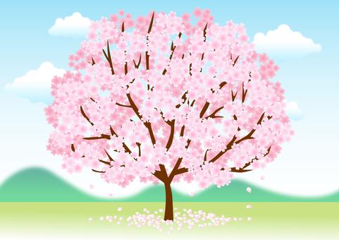 Cherry blossoms 118