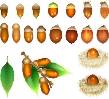 ai acorn for autumn set