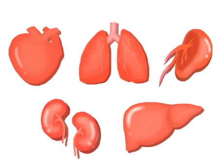 Five organs