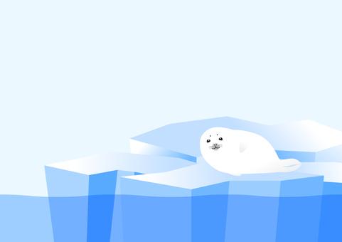 Seal seal baby on drift ice