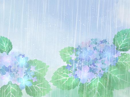 비와 수국