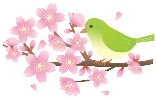 櫻桃樹和mezzo 2
