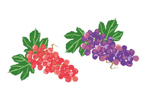 Grapes of grape vine and red
