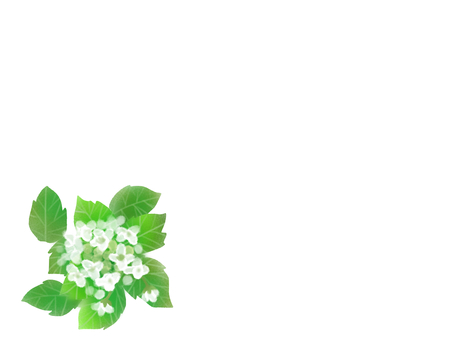 와사비 (고추 냉이) 꽃