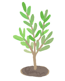 Tree (sapling)