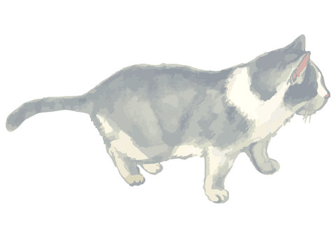 Watercolor style cat illustration