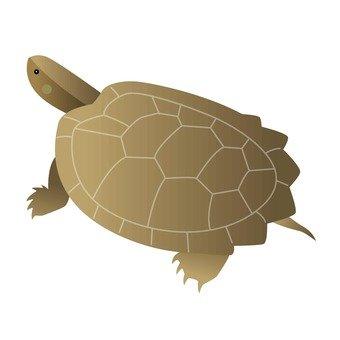 거북이 12