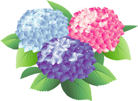 Hydrangea background 03