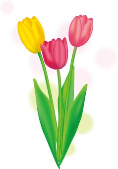 Free illustration tulip fashionable